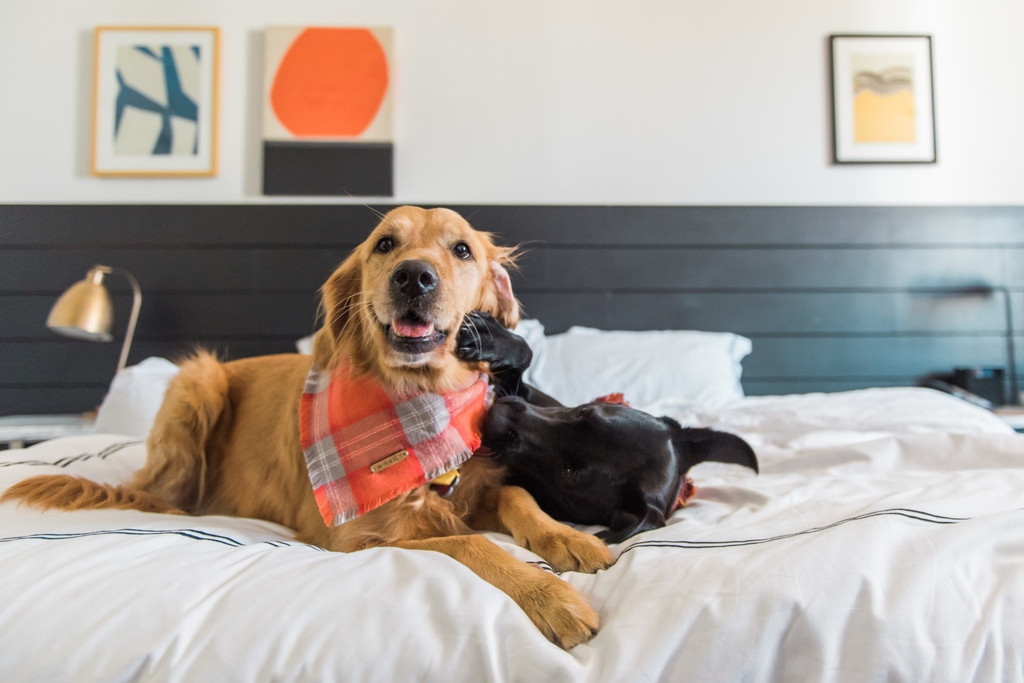 Kimpton Buchanan Hotel San Francisco Road Trip Dog Friendly Hotels